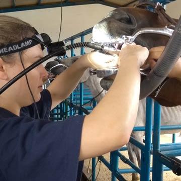 Protocolos anestésicos em equinos saiba quais são usados na odontologia