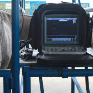 Ultrassonografia em equinos o básico para começar