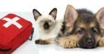 situações emergenciais em pequenos animais