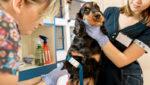 Exames veterinários a importância do pré-operatório