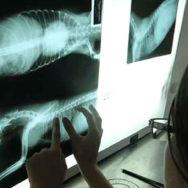 O que é radiologia veterinária Conheça mais essa técnica