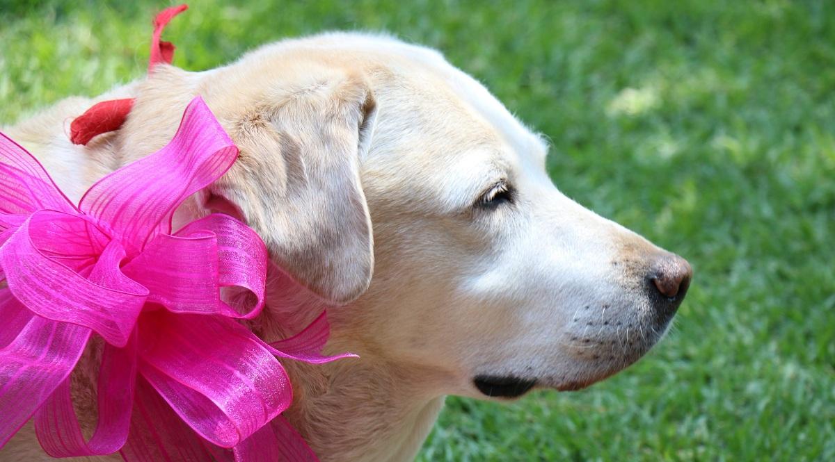 Eclâmpsia em cadelas