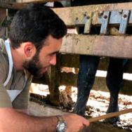 Exame andrológico bovino conheça as vantagens