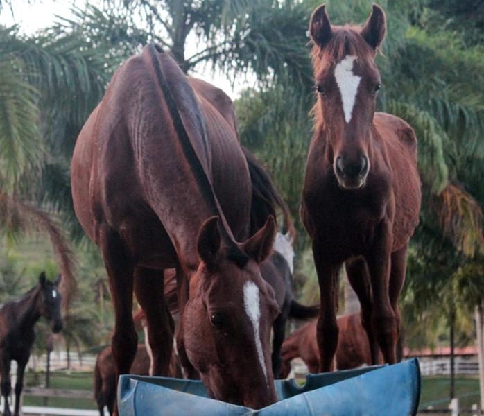 Saiba como realizar um planejamento nutricional para equinos