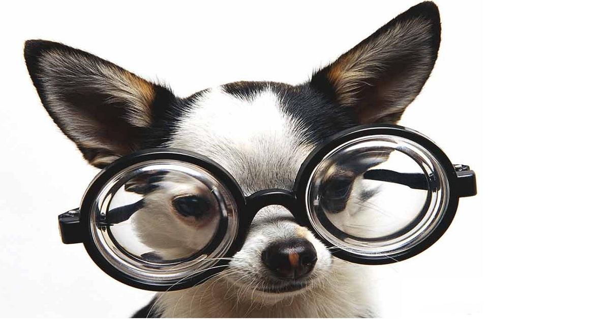 doenças oculares em cães