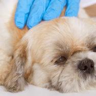 Endoscopia veterinária entenda mais do seu papel na clínica