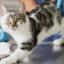 Dermatofitose em gatos conheça mais sobre esse mal silencioso