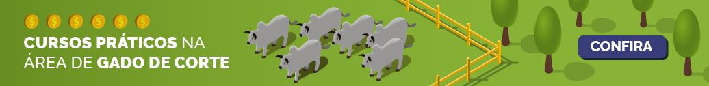 Cursos de gado de corte