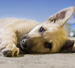 Fluidoterapia veterinária