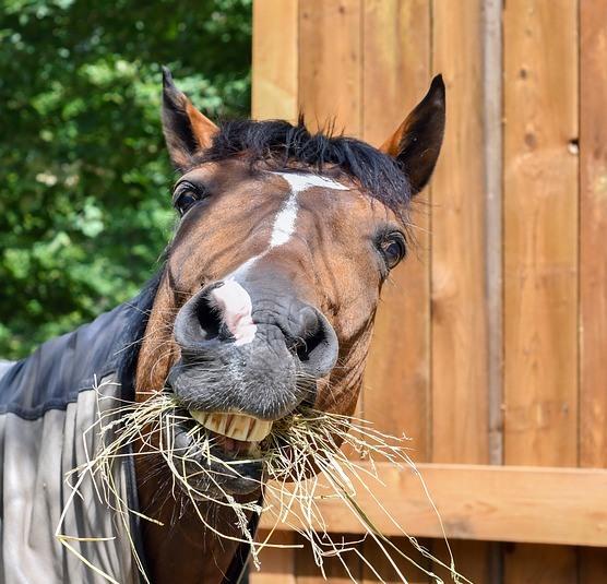 A importância dos cuidados com os dentes dos cavalos