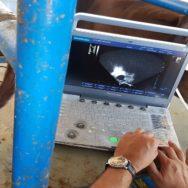 ultrassonografia na reprodução equina