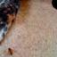Picada de abelha em cães: É preciso agir rapidamente