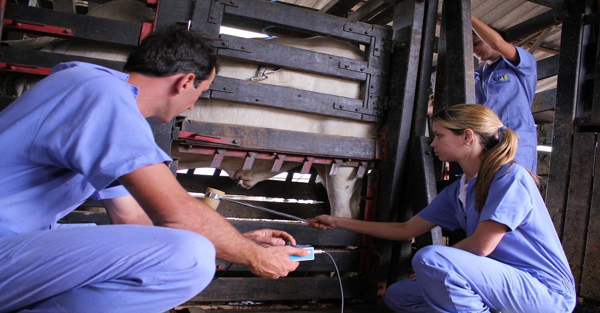 Exame andrológico em bovinos