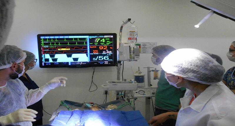 anestesia inalatória veterinária