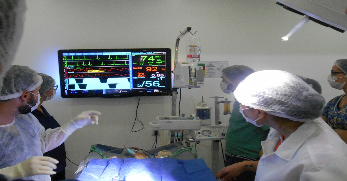 anestesiologia inalatória veterinária