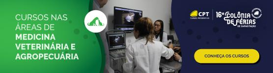 ciclo estral em cadelas diagnóstico ultrassom veterinário