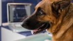 Emergências veterinárias e a ultrassonografia em pequenos animais