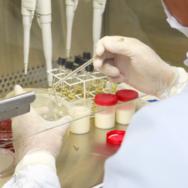 Exames Laboratoriais Veterinários conheça a importância