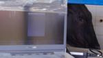 Ultrassonografia em bovinos saiba quais são as principais aplicações no manejo reprodutivo