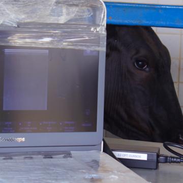 Ultrassonografia-em-bovinos-saiba-quais-são-as-principais-aplicações-no-manejo-reprodutivo