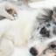 Eletrocardiograma veterinário entenda mais sobre este exame