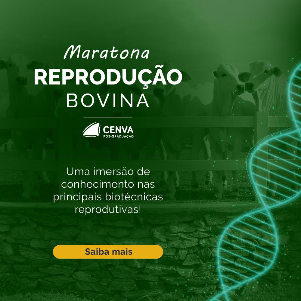 Maratona da Reprodução Bovina