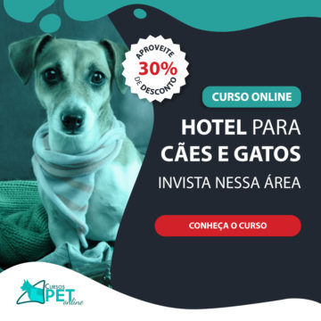 Curso Online Hotel para Cães e Gatos