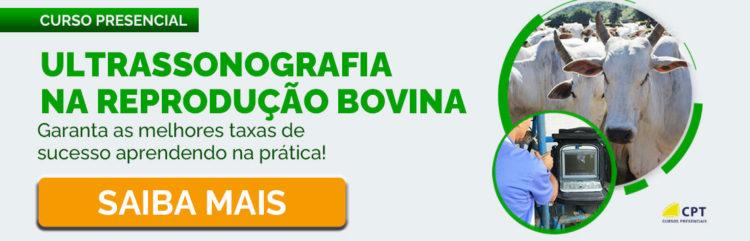 Ultrassonografia na Reprodução Bovina