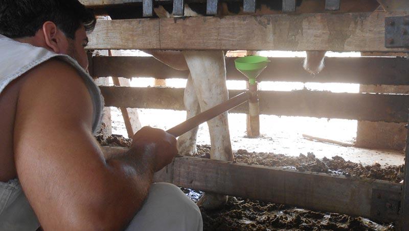 Conheça as patologias espermáticas em bovinos e como elas afetam a reprodução