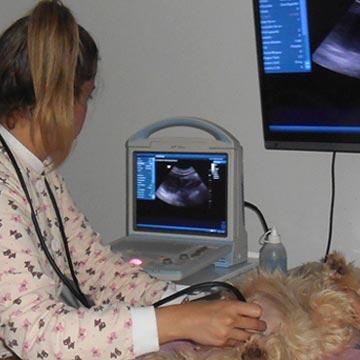 Ultrassonografia dos linfonodos abdominais em pequenos animais