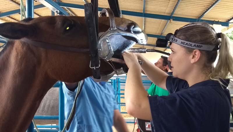 PEED pontas excessivas do esmalte dentário em equinos