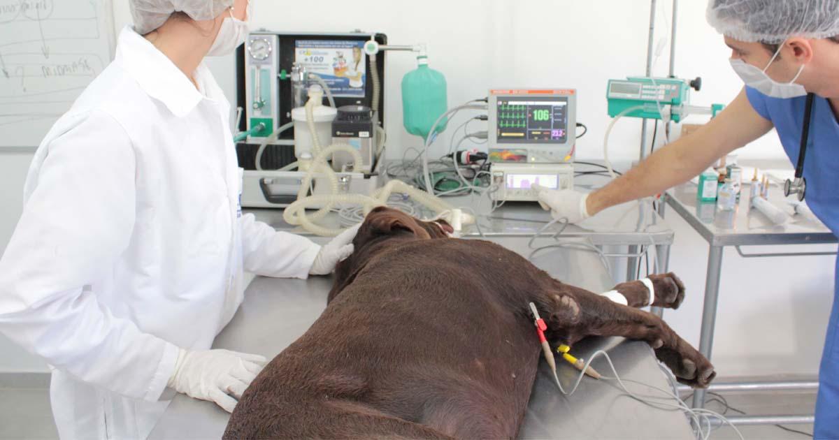 Monitorização anestésica veterinária entenda sua importância na cirurgia de pequenos animais